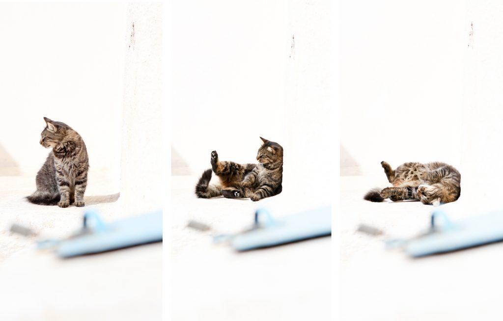 Katze von Pyrgos